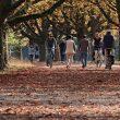 Jesen u parku.